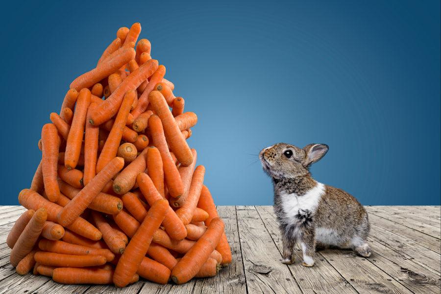 Niedlicher Hase sitzt vor einem großen Haufen Möhren und schaut ihn an.